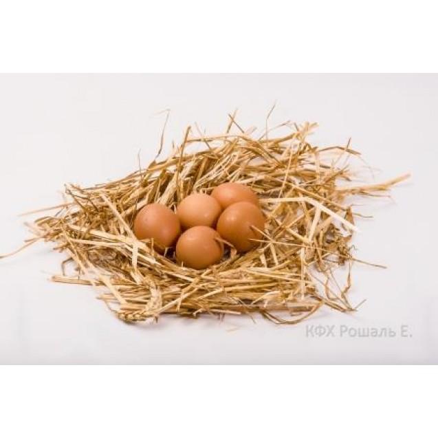 Яйцо цесарки домашнее