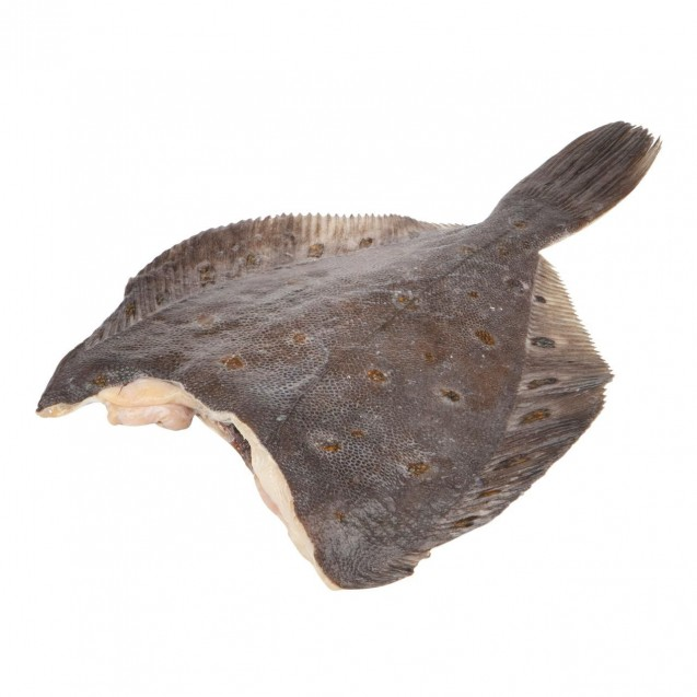 Камбала белобрюхая